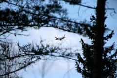 Airplane in trees