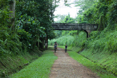 Old track bed in Bukit Timah nature reserve